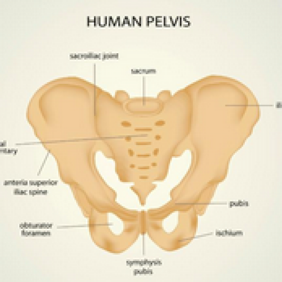 Pelvic Function Research Article by Rachel France